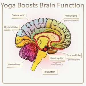 Yoga Boosts Brain Function Illustration